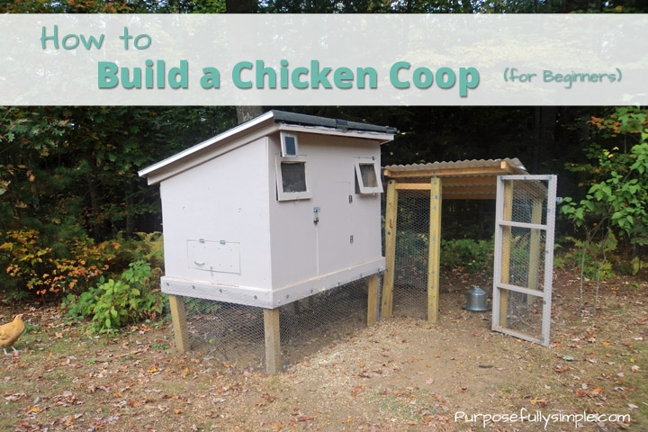Learn how to build a chicken coop for beginners and find out how we built our coop with almost no construction experience. You can do it too!