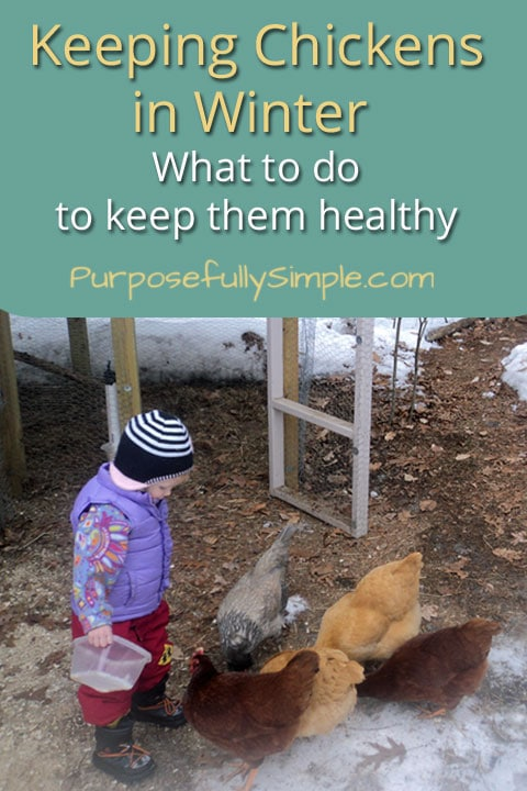 Keeping chickens in winter can feel overwhelming when you're a newbie. Here are some tips to keep your girls happy and safe in the cold months.