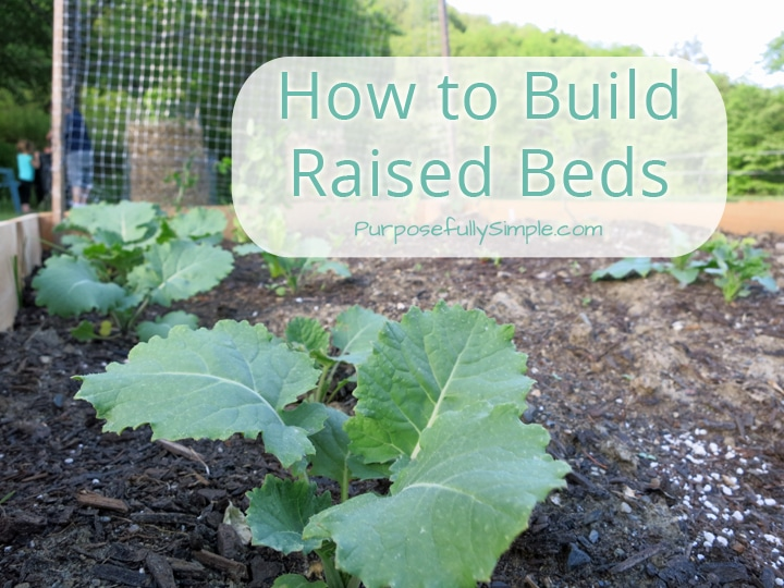There are so many wonderful things about raised bed gardening! Learn how to build your own raised beds cheap and quick! | Purposefully Simple
